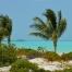 beach-croosings-palm-villa